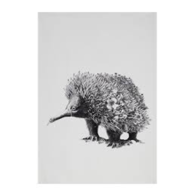 MAXWELL WILLIAMS WILDLIFE TEA TOWEL 50x70cm ECHIDNA